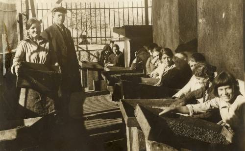 Raisin sorting in Marathoupolis, 1932