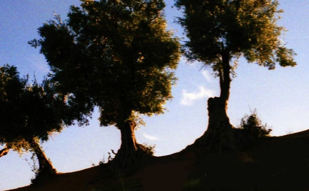Olive Roads (Roads of the olive tree)