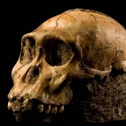 Sapiens: Το μακρύ ταξίδι της ανθρωπότητας