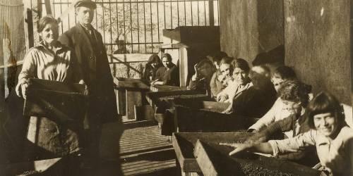Raisin sorting in Marathoupolis, 1932